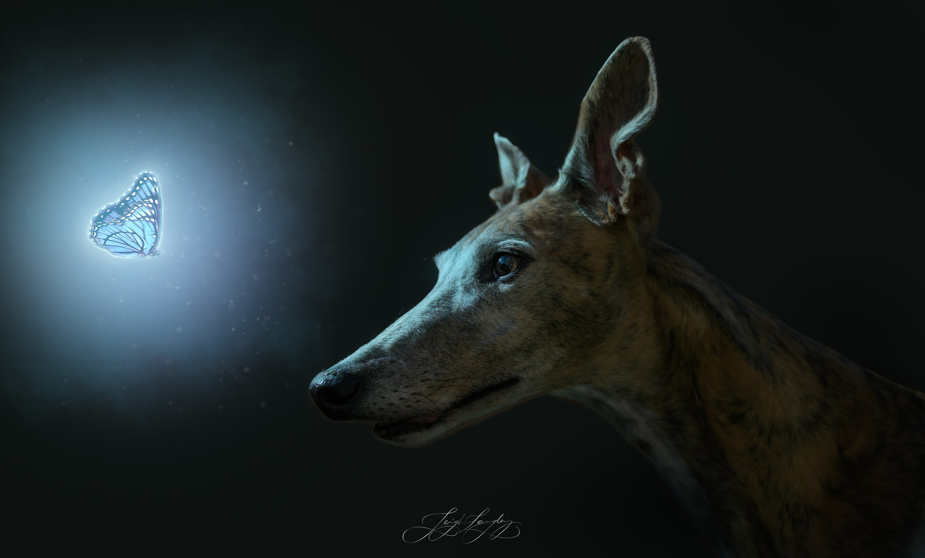 This is a composite of my beautiful greyhound Ana.
